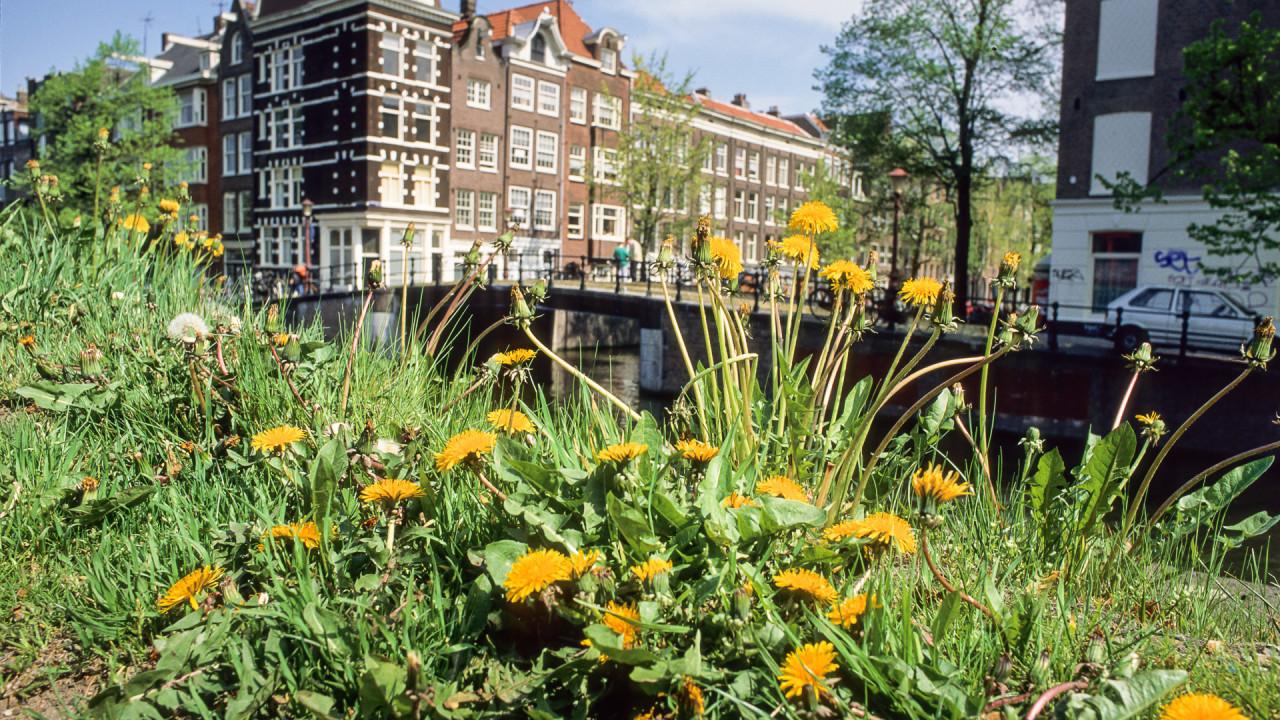 Innovatieplatform amsterdam green campus officieel gestart for Amsterdam economica